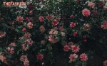 laure-de-sagazan-2017-spring-bridal-collection-wedding-gown-014